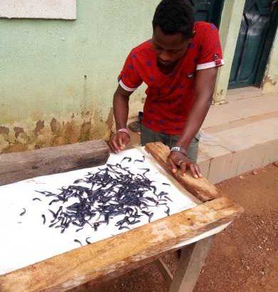 Catfish fingerings and juveniles