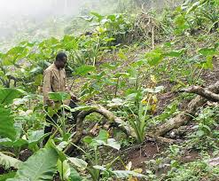 COVID-19 affects hope for a good farming season in Nigeria