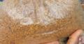 Fenugreek Seed(1kg)