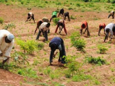We won't allow farmers suffer in 2020 cropping season-FG