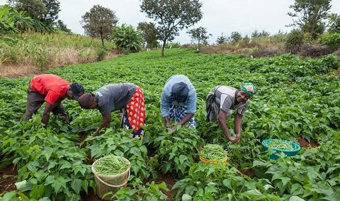 Farmers find solace in CBN's interest rate cut
