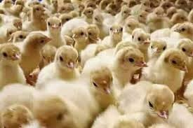 ADEBEST POULTRY FARM PRICE AND LIST FOR BROILERS