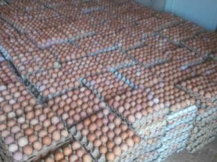 ADEBEST POULTRY FARM PRICE LIST FOR FRESH EGGS ☎