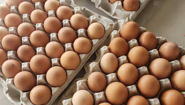 jumbo size eggs crates for sale at a discount price.