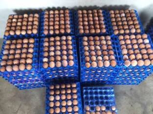 Direct medium eggs for sale