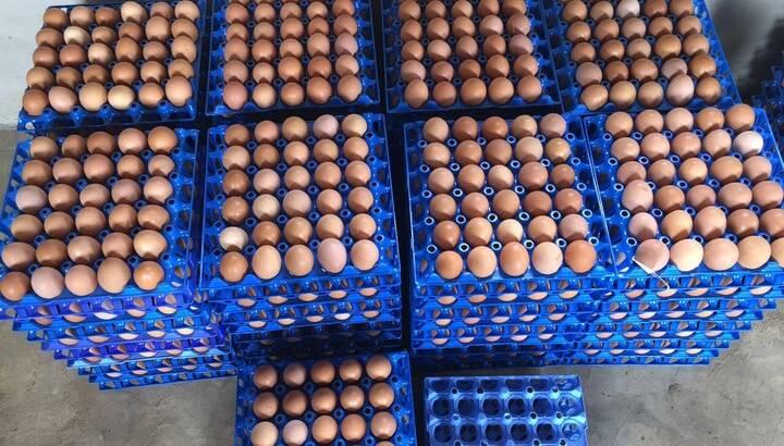 Direct medium eggs for sale