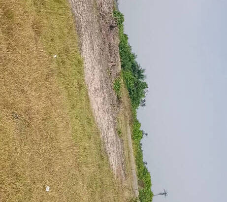 ACRES OF LAND UP FOR SALE